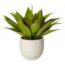 Agave-Tub Pot